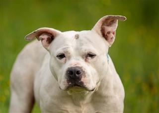 Search Adoptable Animals | San Diego Humane Society